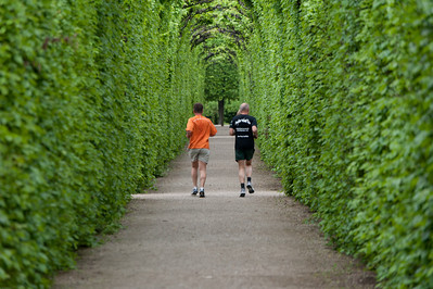 Closer shot of joggers at the tree-lined pathwalk - Vienna, Austria