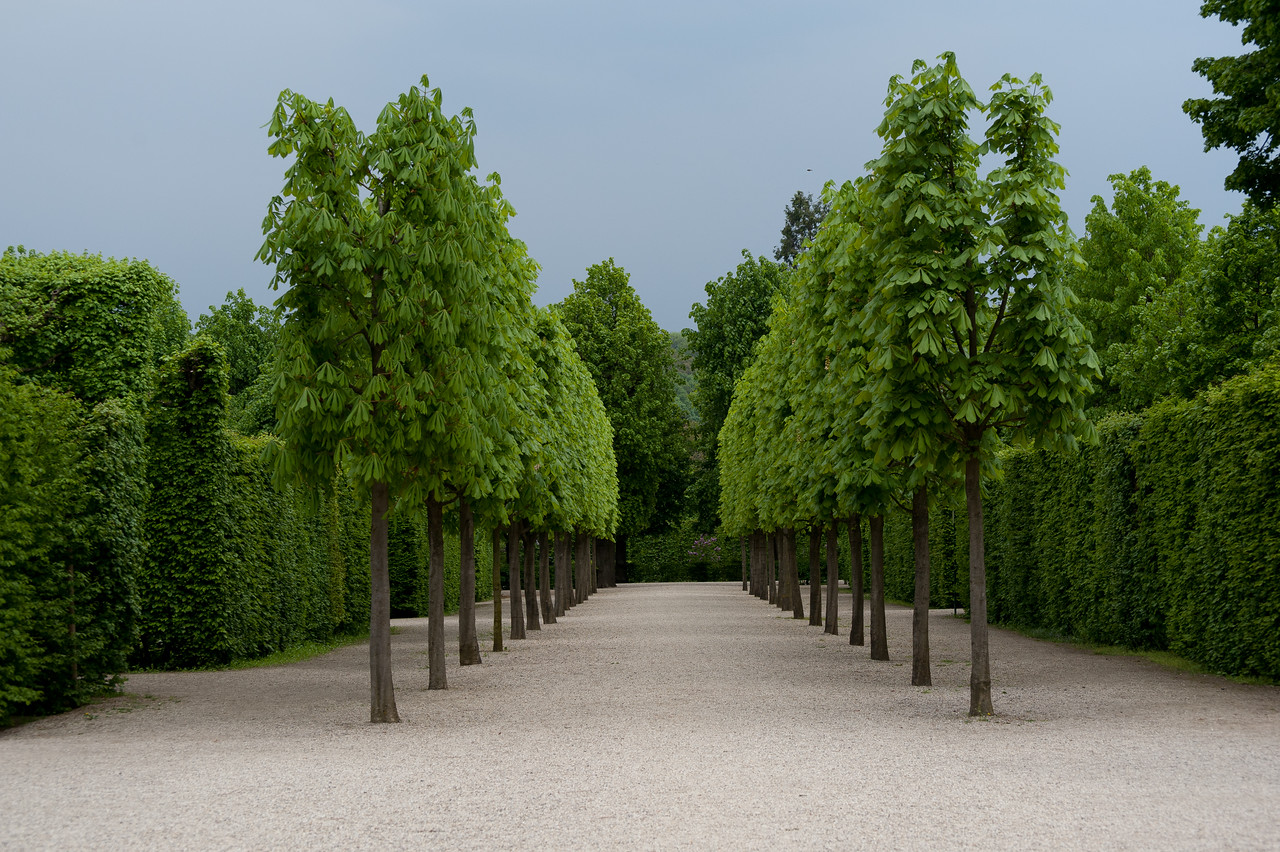 Beautifully trimmed trees and hedges at Schonbrunn Garden - Vienna, Austria