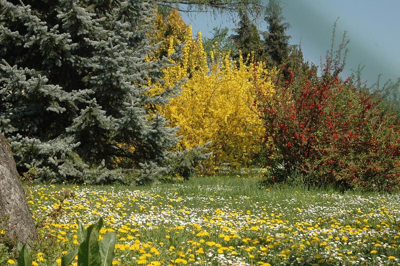 Springtime in Vienna