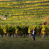 Vineyards, Wachau Valley