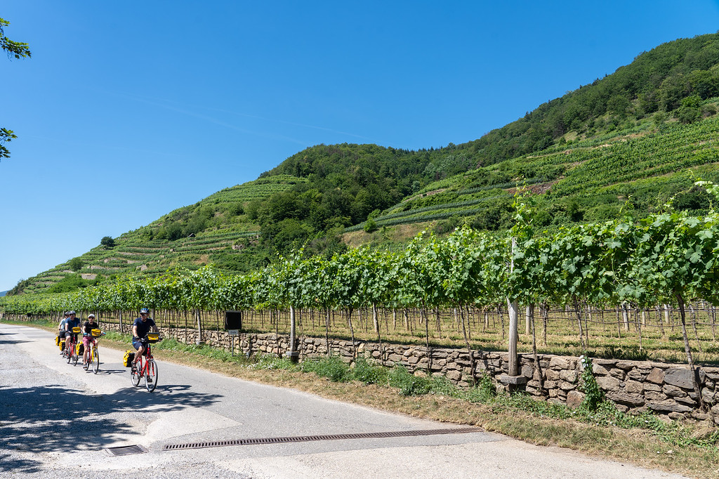 Cycling past vineyards in the Wachau Valley in Austria