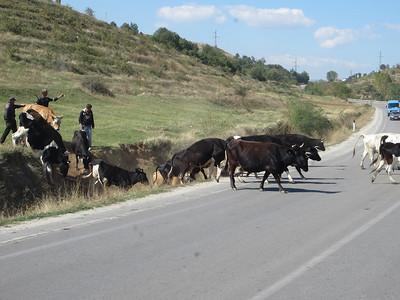 Albania 289