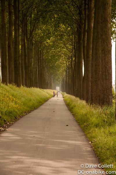Nice tree-lined avenues