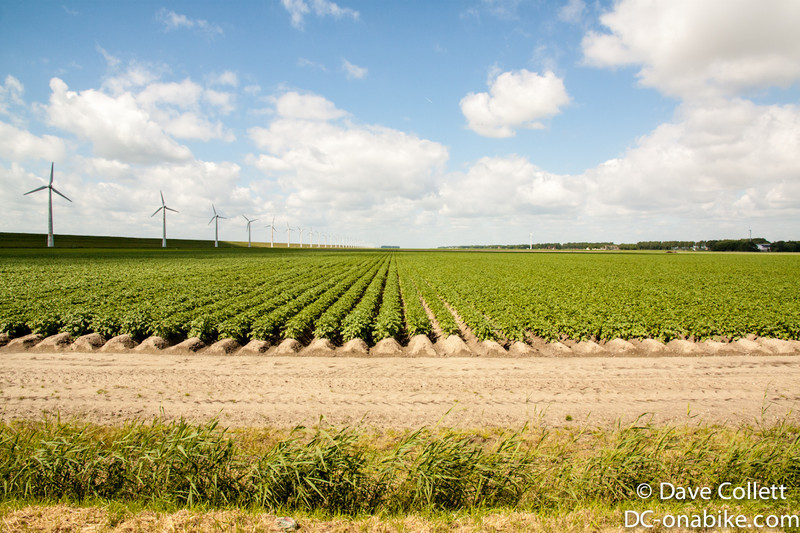 Wind turbines and crops