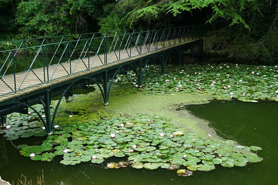 Bridge with water lilies