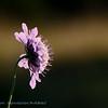 Wild; flowers;