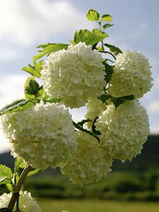 Flower in Busson