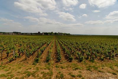 Vougeot - Chardonnay Vineyard