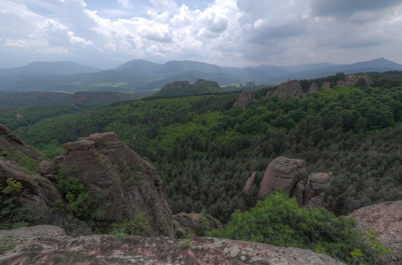 Wide shot of forest canopy in Belogradchik, Bulgaria