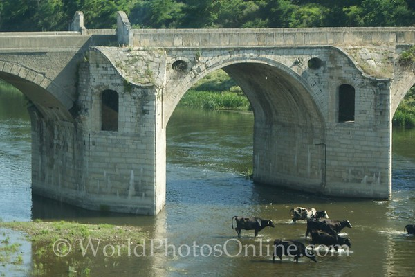Veliko Tarnovo - Bridge with Cattle