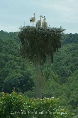 Vidin - Stork Nest