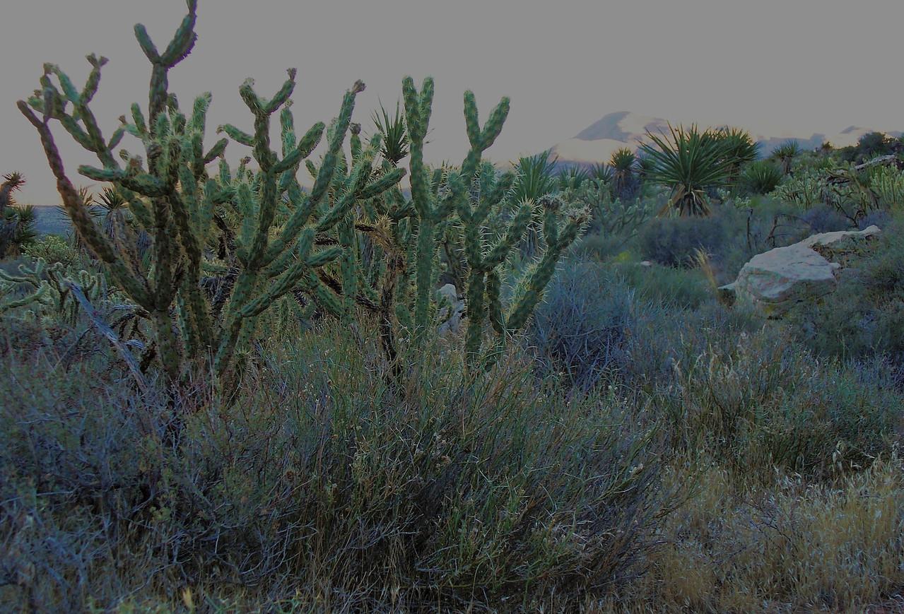 Cactus evening