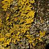 Lichen, Avebury