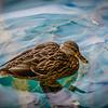 039_2013_Plitvice_Lakes_nat_park_-5391