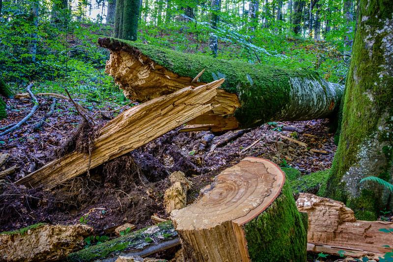 Forest Logs - Plitvice Park