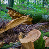 Forest Logs - Plitvice Park
