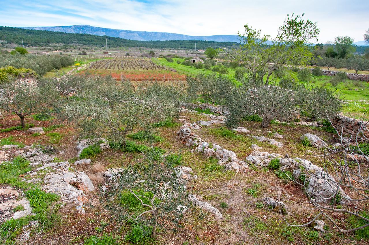 Wide shot of fields in Hvar, Croatia