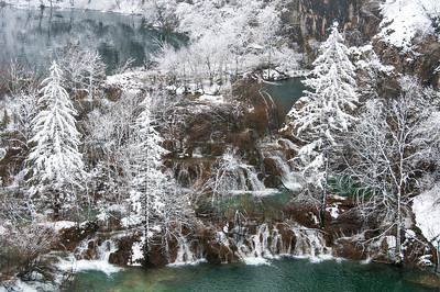 An isolated shot of trees in Plitvice Lakes National Park - Croatia