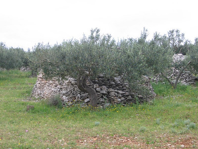 stone piles in olive orchards