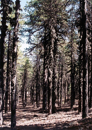 On the Artemis trail, Troodos