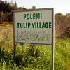 Cy 1905 bord 'Polemi tulip village'