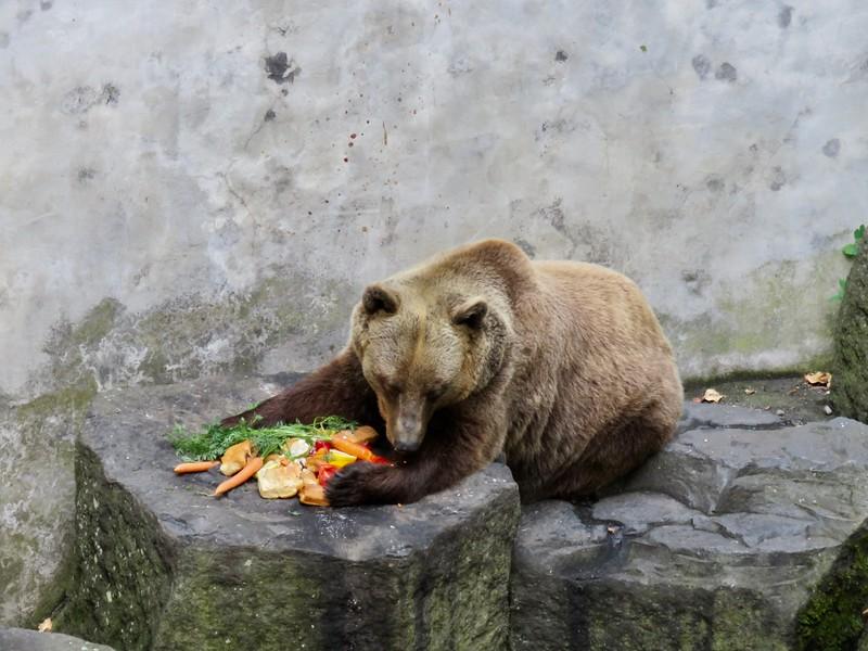 Bears, Castle moat in Český Krumlov