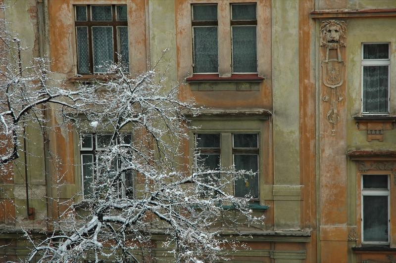 Tree at Winter - Prague, Czech Republic
