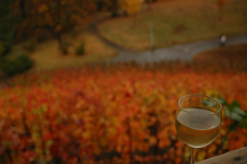 Glass of Wine - Prague, Czech Republic