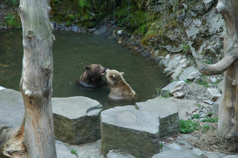 Bears - Cesky Krumlov, Czech Republic