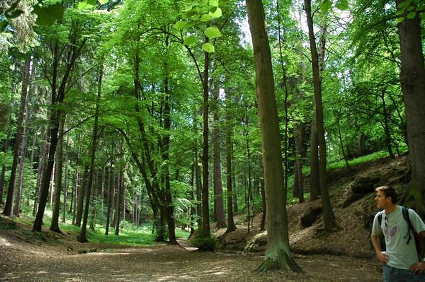 Trees - Kokorin, Czech Republic