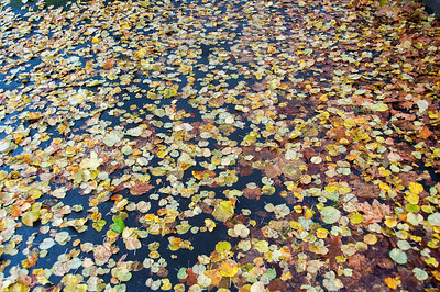 Autumn leaves on river at Bath, England