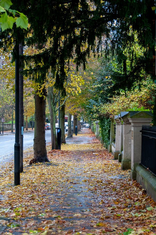 Autumn petals along side street in Bath, England