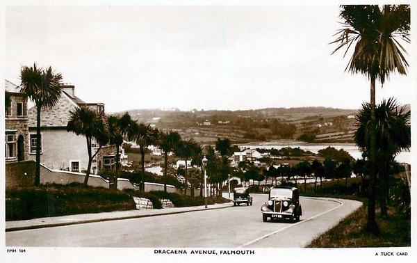Dracaena Avenue