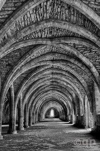 CELLARIUM IN BLACK AND WHITE