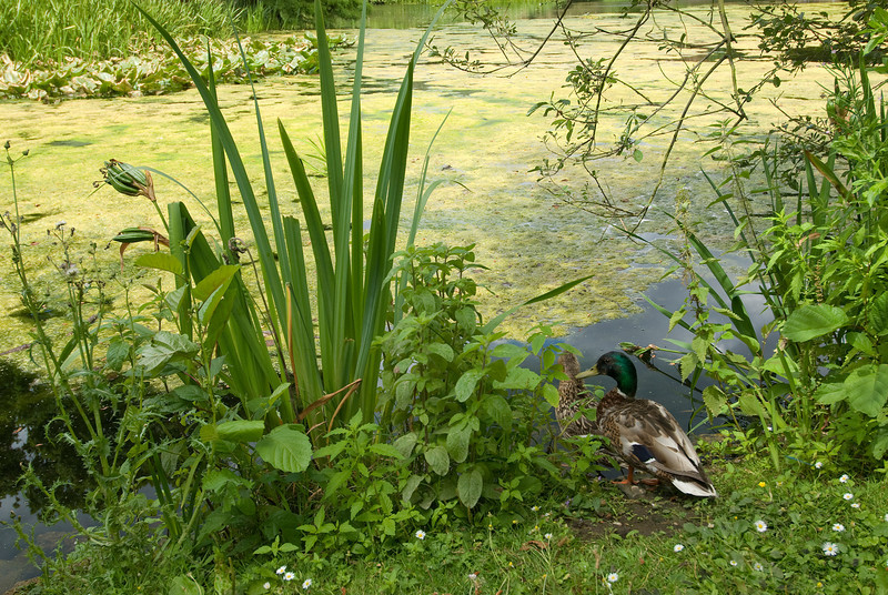 Birds at a pond in the Royal Botanical Gardens - Kew, England