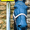 Horse in wall. Stow-on-the-Wold is a market town and civil parish in Gloucestershire, England. It is situated on top of an 800ft (244 m) hill, at the convergence of a number of major roads through the Cotswolds, including the Fosse Way (A429). The town was founded as a planned market place by Norman lords to take advantage of trade on the converging roads. Fairs have been held by royal charter since 1330 and an annual horse fair is still held on the edge of the town. There has been a market here since 1107, when Henry II granted a charter, and changed the name of the town from Edwardstow.