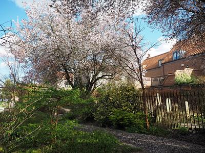 Park in Beverley, England