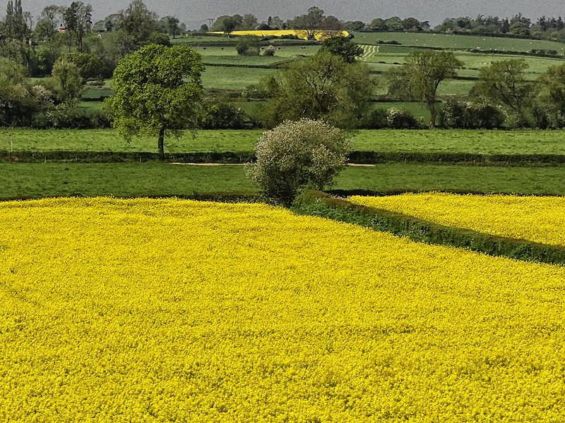 Countryside - Central England