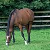 of handsome Irish race horses...