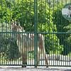 Guard Donkey?