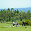 along with terrific unspoiled scenery and some great looking horses.