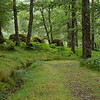 A lovely forest walk nearby with moss growing on all sides of the rocks and trees; impossible to determine north here.