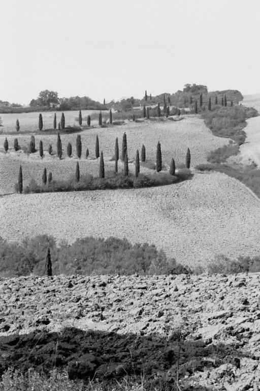 Cypress Trees - Tuscany, Italy