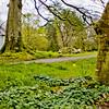 Blarney Castle Photograph 24