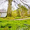 Blarney Castle Photograph 25