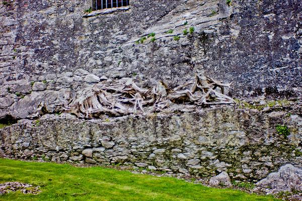 Blarney Castle Photograph 14