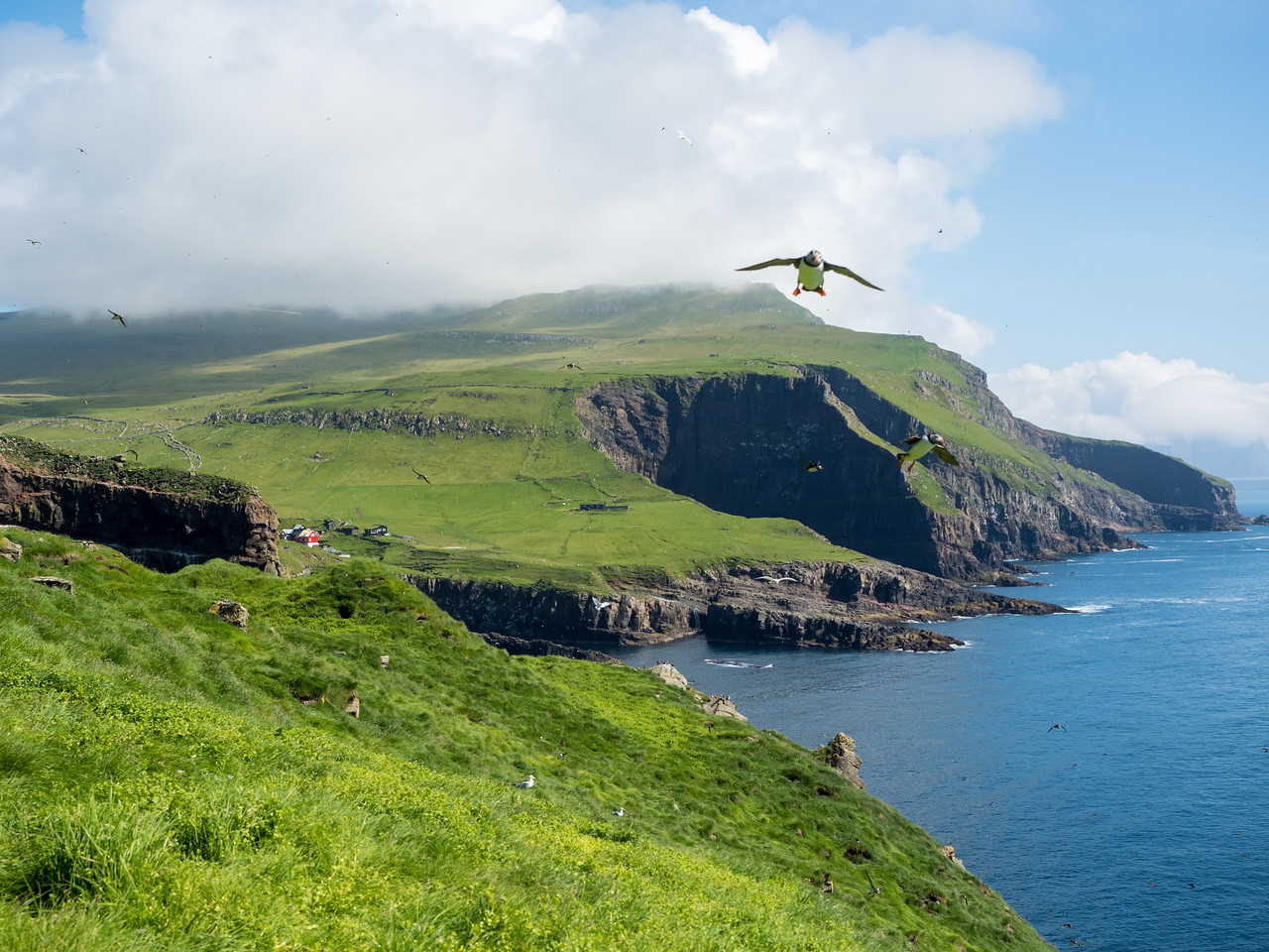 Birds on Mykines