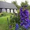 Botanical Garden Akureyri (Lystigarður), Iceland