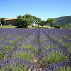 We hopped in the car and started the long drive back. On the way we saw something which is the staple of Provence, France. The long fields of Lavender were a sight to see for sure!