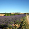 More fields of Lavender drifted along our footsteps and passed quickly into memory.